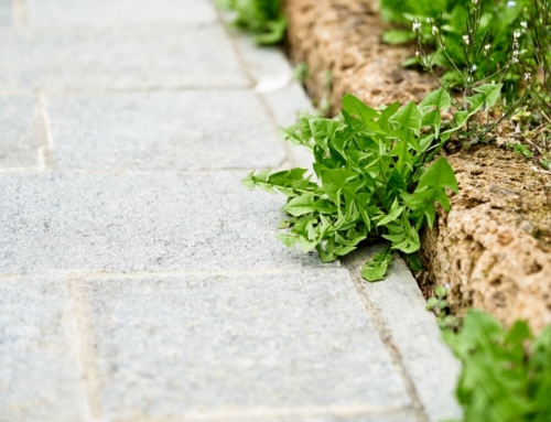 Can Pressure Washing Remove Weeds?